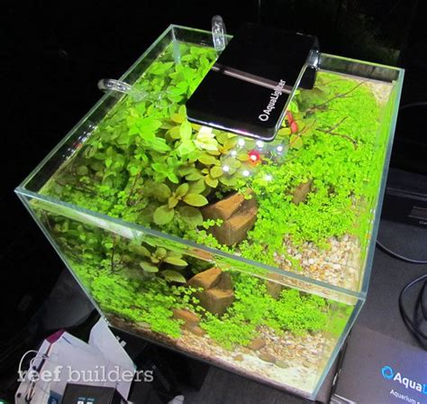 beleuchtung nano aquarium top 5 led lights for nano reef aquariums in 2012 marquee