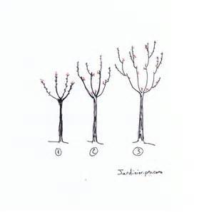 taille des cerisiers comment tailler un cerisier