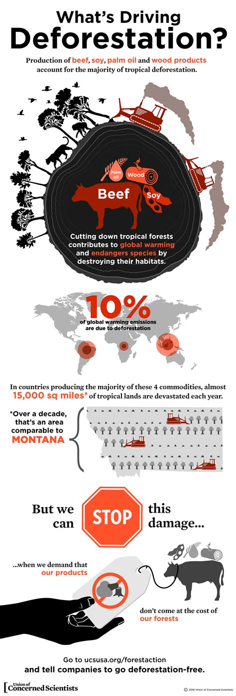 experts say that global warming makes animals shrink infographic what s driving deforestation union of