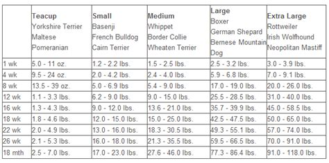 puppy growth australian shepherd growth chart models picture