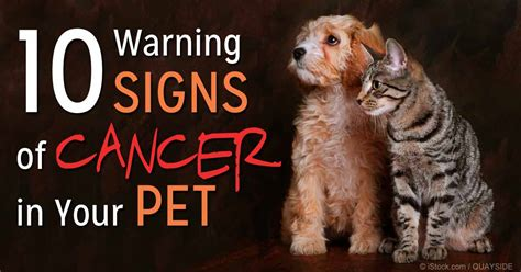 types of cancer in dogs pictures of mammary lymphoma in dogs breeds picture