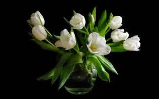 White Flowers In Vase 꽃병 흰색 튤립 꽃 검은 색 배경 배경 화면 1920x1200 배경 화면 다운로드 Kr
