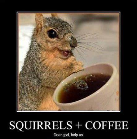 Funny Squirrel Memes - monday memes squirrels nepa blogcon