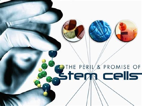 Biological Presentation On Stem Cells Cell Powerpoint Template