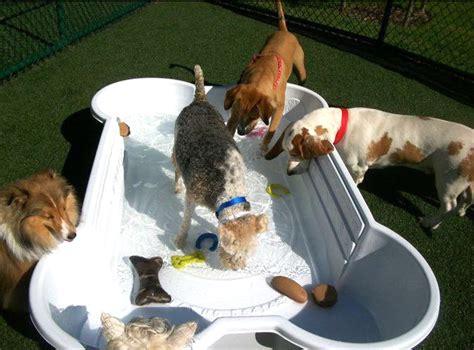 bone pool dog swimming pools dog bone pool deck