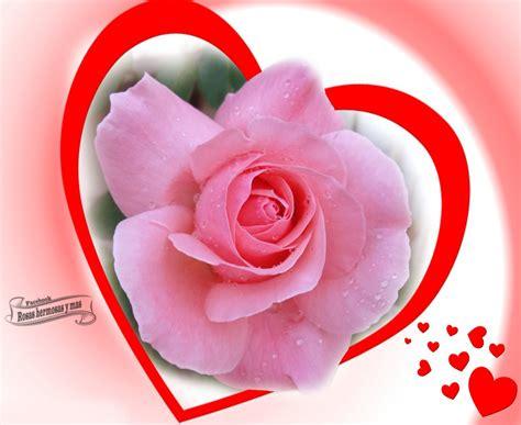imagenes rosas muy hermosas imagenes de rosas hermosas newhairstylesformen2014 com