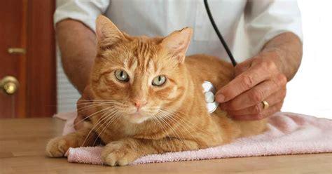 is your vet cat friendly vet qualities
