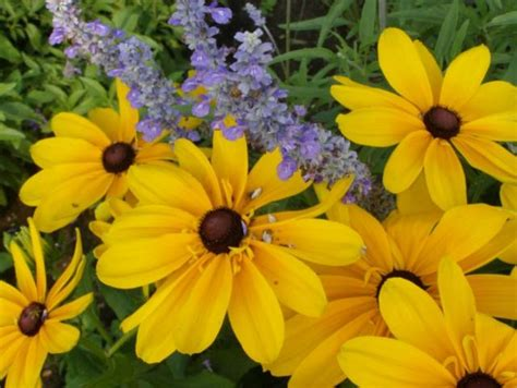 bright colored flowers bright colored summer flowers pictures jpg hi res 720p hd
