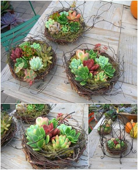 10 Cool Succulent Planter Ideas For Your Home Succulent Planter Ideas