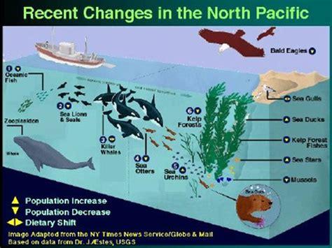 sea otter diagram kelp forest food web diagram food ideas