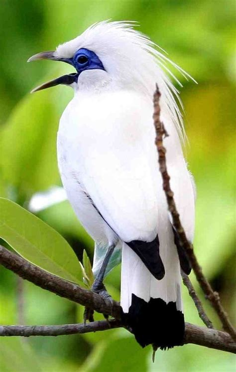 best 25 artificial birds ideas on pinterest tropical 25 best ideas about tropical animals on pinterest