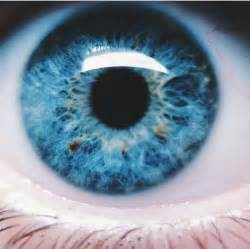 Most Beautiful Colors Best 25 Bright Blue Eyes Ideas Only On Pinterest