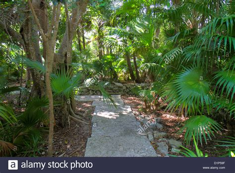 Key West Tropical Forest And Botanical Garden Florida Key West Florida Key West Tropical Forest And Stock Photo Royalty Free Image