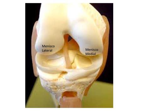 corno posteriore menisco interno les 245 es meniscais o que s 227 o quais as suas causas e como