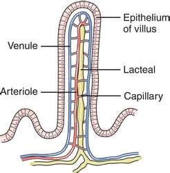 pl l definition villus definition of villus by medical dictionary