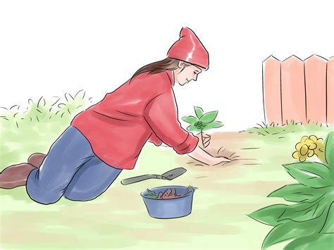 how to hunt for wild ginseng 11 steps with pictures how to hunt for wild ginseng 9 steps with pictures