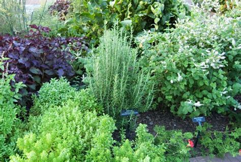 planting an herb garden herb gardens how to grow herbs indoors and out