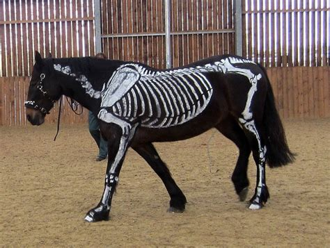 horses and halloween bridles and blue ribbons