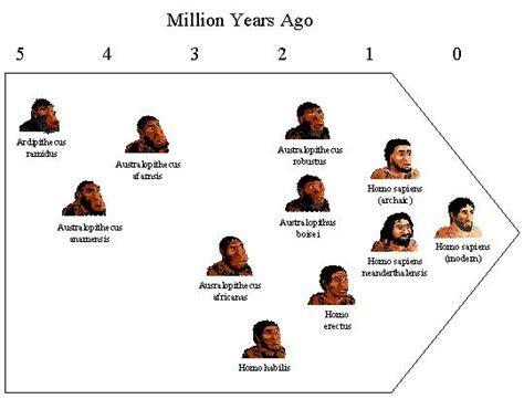 human evolution flowchart ch25 origin of on earth ch26 tree of ch34