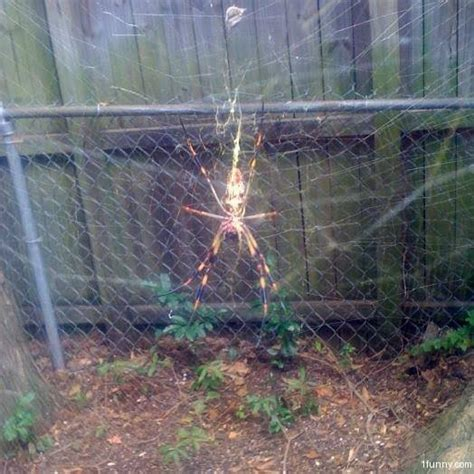 backyard spiders backyard spider monster 1funny com