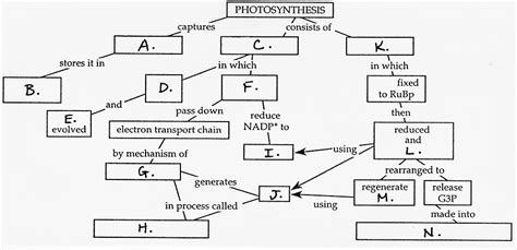 steps of photosynthesis flowchart bil 150 nt workshop 4