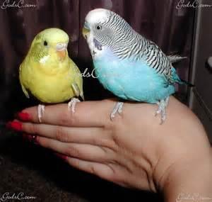 selecting a pet bird god s creatures
