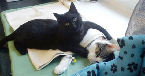 how to comfort a sick cat shelter rescues cat later realizes it has a special gift