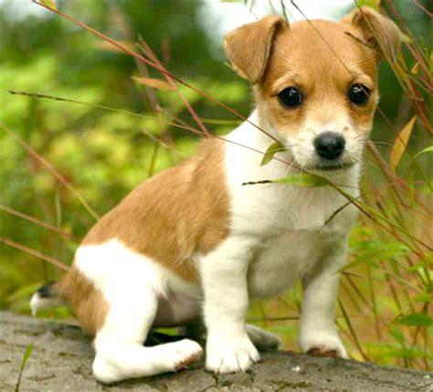 imagenes jack bebe im 225 genes de perros banco de imagenes y portadas para