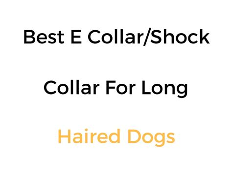 best e collar for dogs best e collar shock collar remote collar for haired dogs