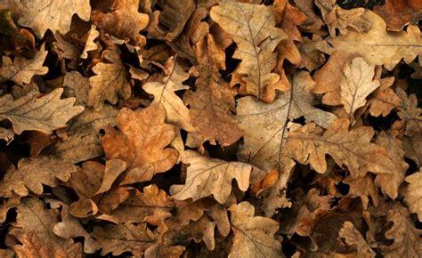 Garten Pflanzen Saurer Boden by Ziergarten Die Besten Gartentipps Im Oktober Garten