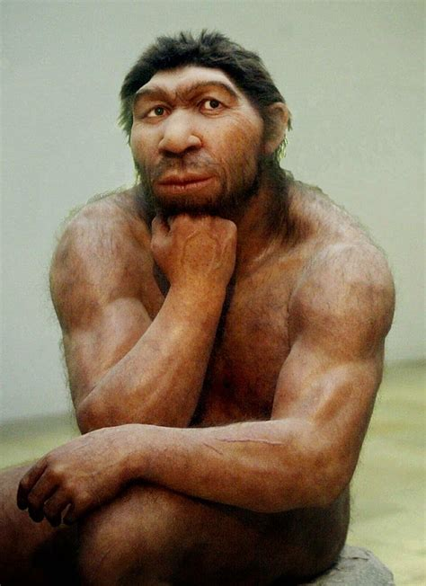 17 best images about neanderthals on pinterest museums