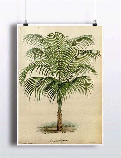 printable tree poster antique 1800s palm tree print art print poster palm tree wall