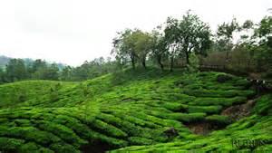 file tea garden jpg the free encyclopedia