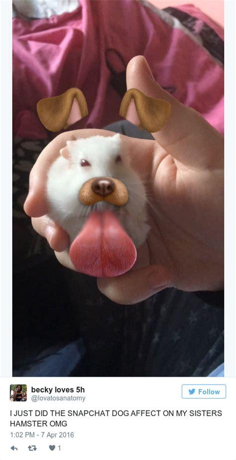 snapchat filter   hamster