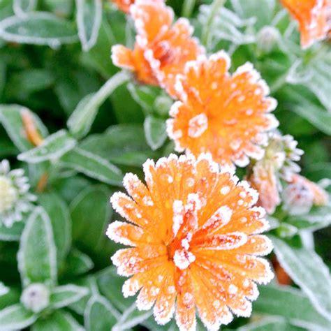 winter garden flowers garden design 60370 garden inspiration ideas