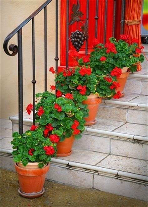 images of 6 flowers in pots 365 best images about gorgeous geraniums on window boxes flowers and