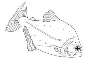 sch 246 ne ausmalbilder malvorlagen fische ausdrucken 4