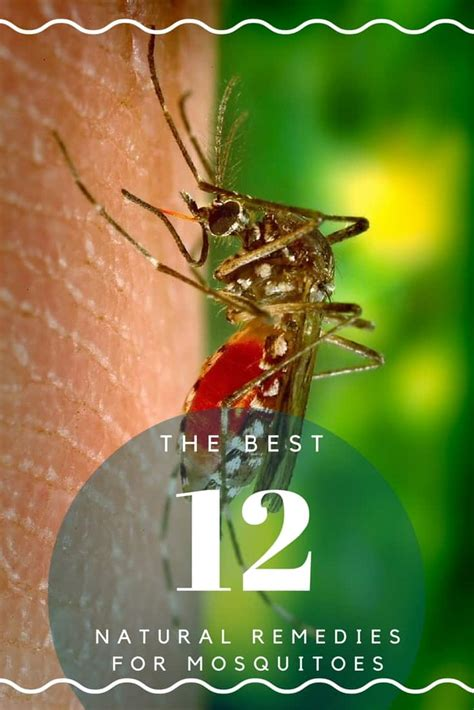 how to get rid of mosquitoes naturally how to get rid of mosquitoes with home remedies how to