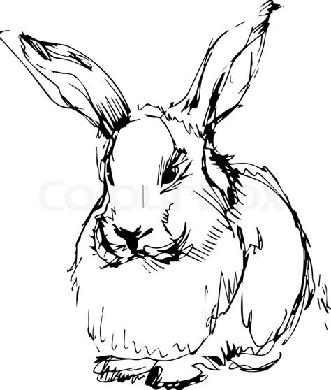 volcano rabbit coloring page a image of a rabbit with long ears stock vector colourbox
