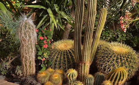 Unique Kaktus 5 unique date ideas for when you re travelling to florals teacups