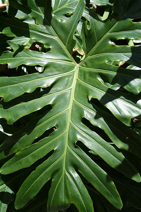 tropical plant leaves biodiversity science buzz