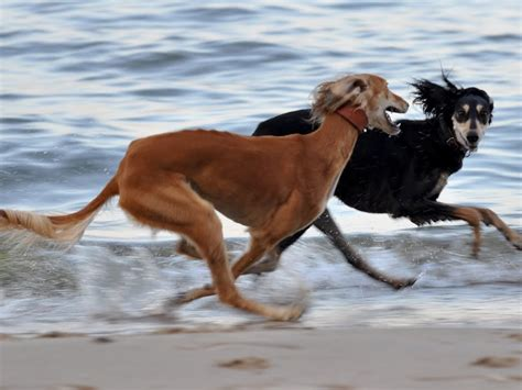 running dogs my free wallpapers nature wallpaper running dogs