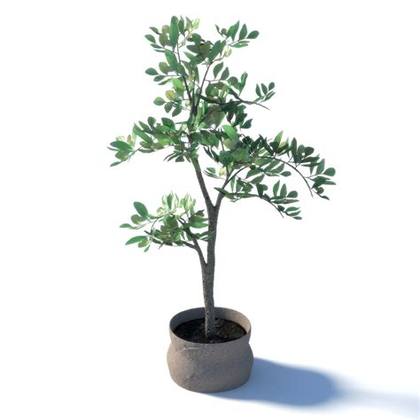 3d model potted ficus benjamina trees set vr ar low