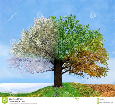 baum le four season tree stock image image of growth floral