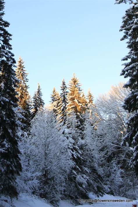 winter images winter scenes in jamtland sweden december 2011 january 2012