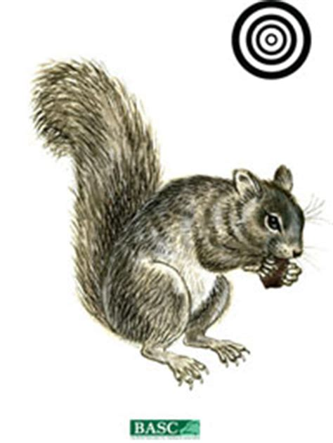 printable shooting targets squirrel air gun targets basc