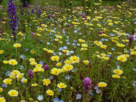 growing wildflowers in backyard mother nature s backyard a water wise garden growing