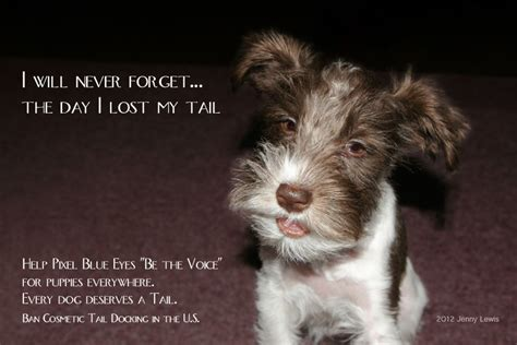 are yorkies born with tails no left breeders who choose not to dock tails healthier puppies