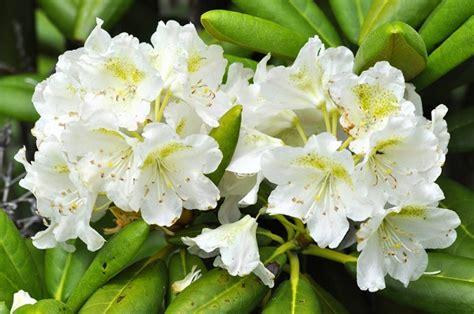 piante fioriscono d inverno 9 piante fioriscono in inverno amicopolis social network
