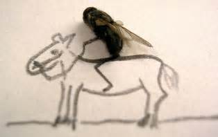 horse flies in house horse fly vs house fly
